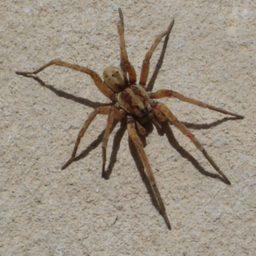 Уничтожение пауков в Бийске